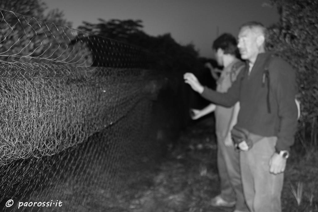 le reti unite ai richiami elletronici rappresentano una combo mortale per gli uccelli migratori