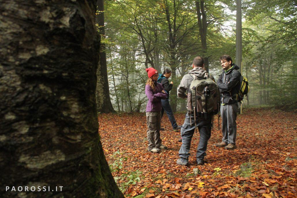foto wolf camp1
