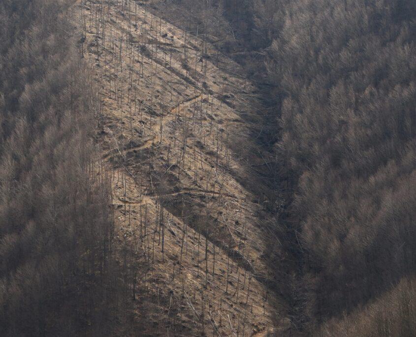 Per tagliare comodamente la foresta vetusta si aprono strade sterrate ovunque coi rischi idreologici del caso e altre conseguenze indirette ma dannose (es. moto da cross che le percorrono illegalmente)